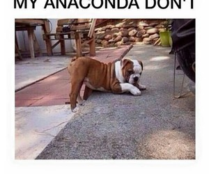 funny, anaconda, and dog image