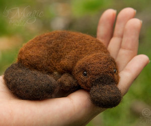felted, felting, and Platypus image