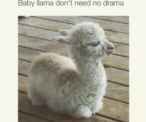 baby, drama, and llama image