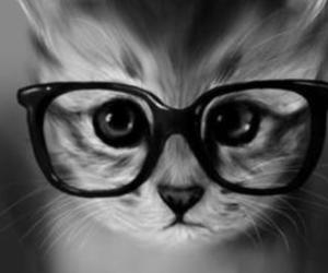 cat, nerdy glasses, and cute image