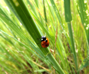 bug, cute, and grass image