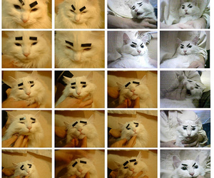 cat, eyebrows, and funny image