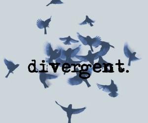 birds, divergent, and tris image