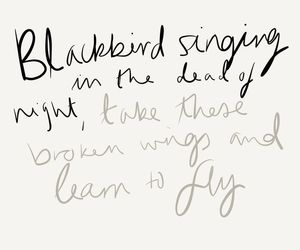 blackbird, Lyrics, and quote image