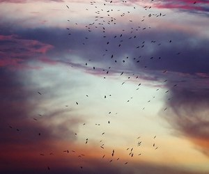 sky, bird, and clouds image