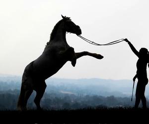 amazing, animal, and passion image