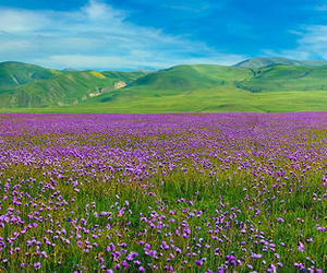 field, flowers, and meadow image
