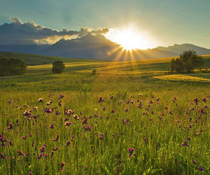 flowers, meadow, and nature image