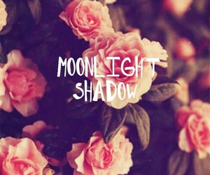 flowers, rose, and moonlight image