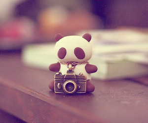 panda, cute, and camera image