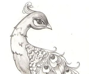 drawing, peacock, and draw image