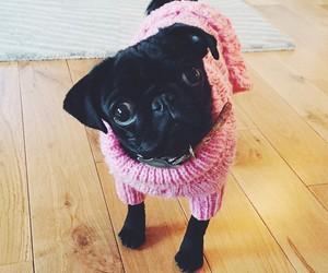 dog, zoella, and cute image