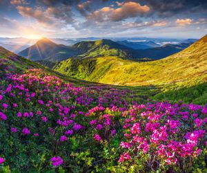 beautiful, flowers, and hills image