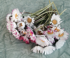 flowers, pale, and cute image