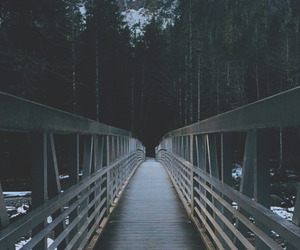 bridge, dark, and forest image