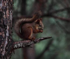 indie, nature, and squirrel image