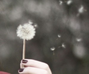 dandelion, sentimental, and wind image