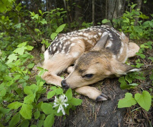 cute, animal, and nature image