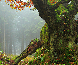forrest, nature, and tree image