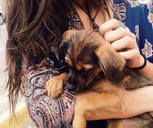 cachorro, perfeito, and *o* image