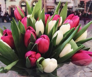 flowers, beautiful, and bloom image
