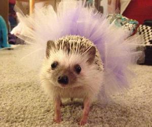 hedgehog, funny, and tutu image