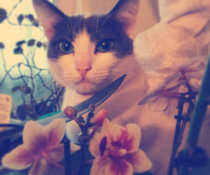 cat, sweet, and love cat image