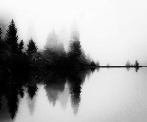nature, fog, and tree image