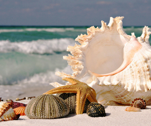 seashells and beach image