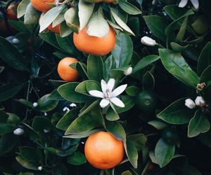 orange, fruit, and green image