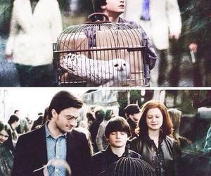 harry potter, ginny weasley, and hogwarts image