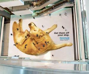 dog, flea, and ad image