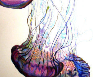jellyfish, art, and color image
