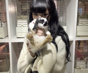 asian, japanese, and rabbit image