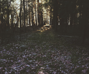 beautiful, dark, and fall image