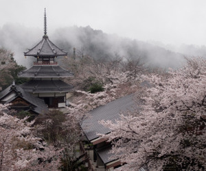 sakura, japan, and asia image