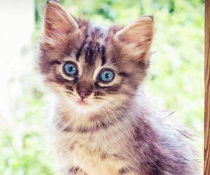 animal, animals, and blue eyes image