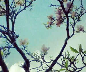 blossom, blue sky, and colourful image