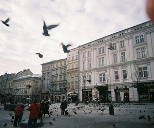 birds, city, and building image