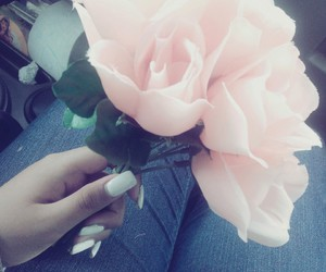 color, flowers, and pink image