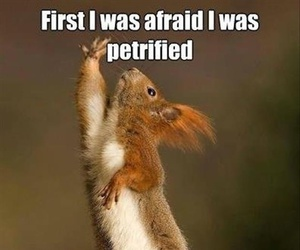 funny, lol, and squirrel image