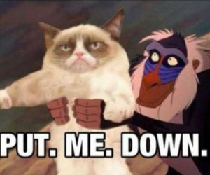 grumpy cat, funny, and lion king image