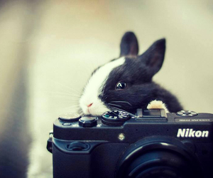 bunny, cute bunny, and black and white bunny image
