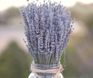 lavender and purple image