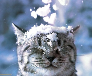 cat, nature, and snow image