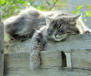 cat and nature image
