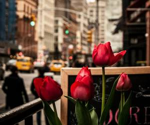 america, yellow cabs, and red tulips image