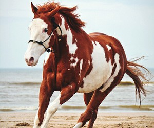 horse, beach, and freedom image