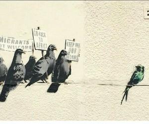 bansky, animals, and birds image