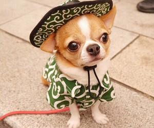 cute, dog, and beautiful image